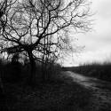 Thetford Forest.